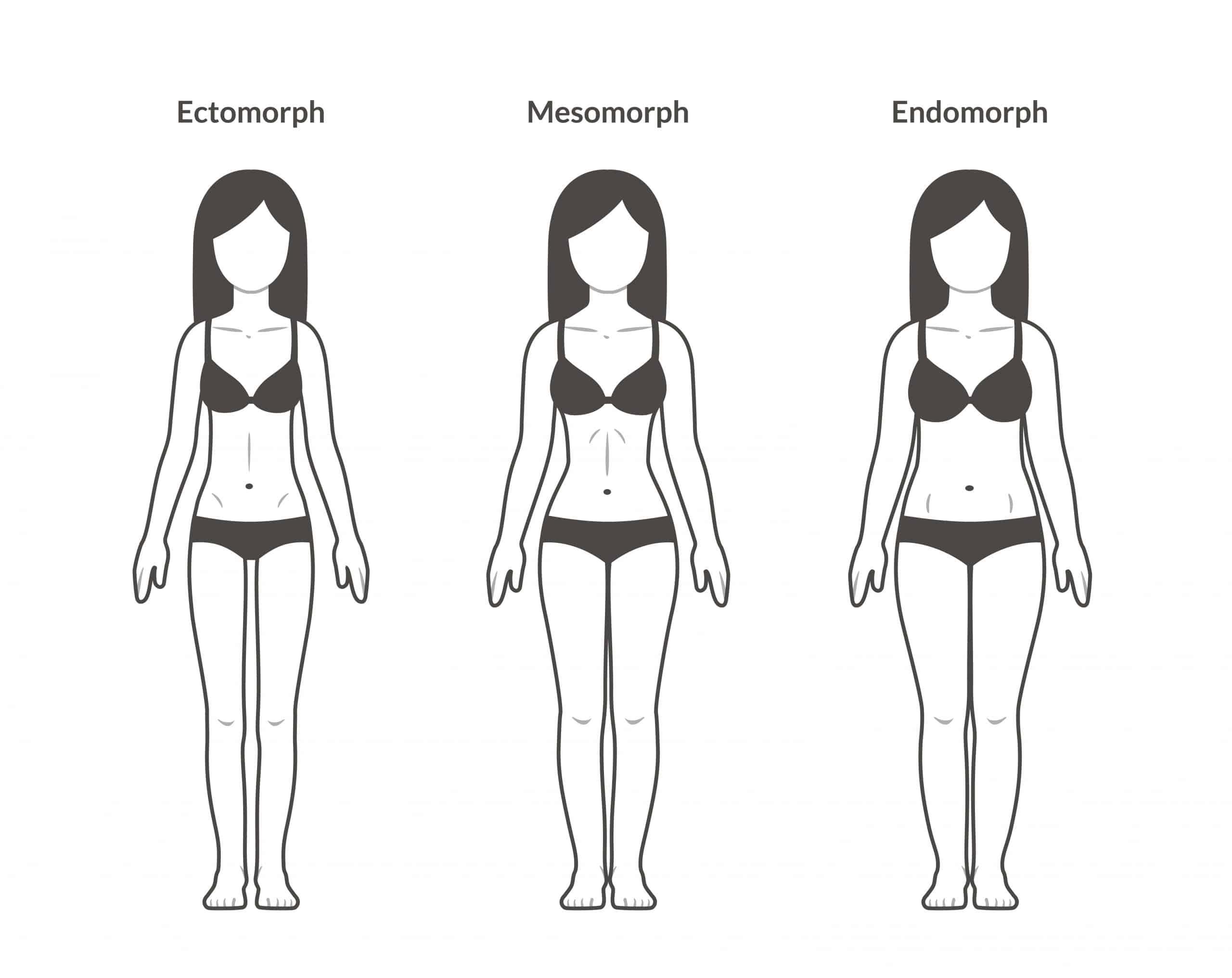 Female body types